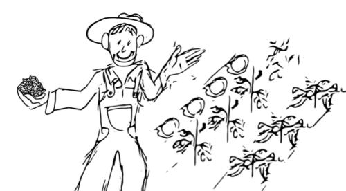 seedfarm